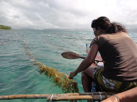 Seaweeds planted